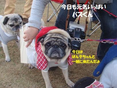 DSC06400_20121204044030.jpg