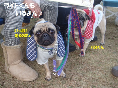 DSC06402_20121204044029.jpg