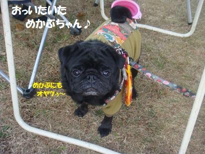 DSC06403_20121204044030.jpg