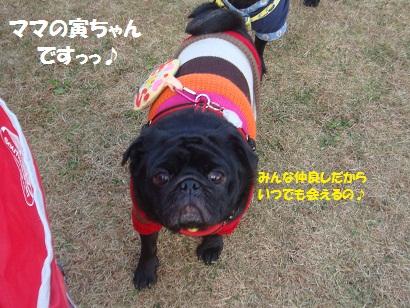 DSC06405_20121204040305.jpg