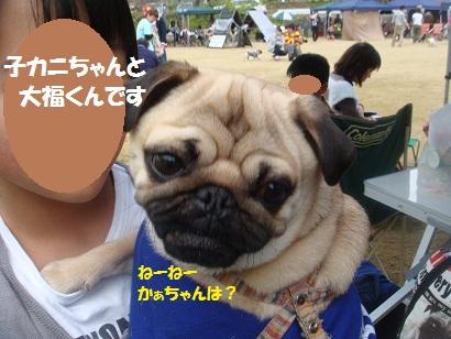DSC06413_20121028162133.jpg