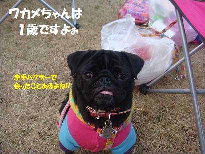 DSC06427_20121209001209.jpg