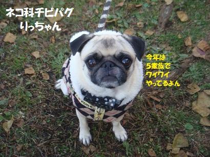 DSC06431_20121206141150.jpg