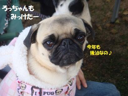DSC06434_20121206141150.jpg