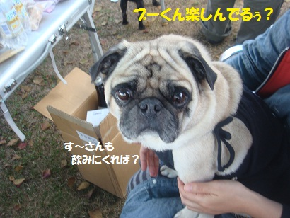 DSC06442_20121206141150.jpg