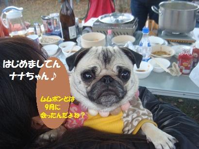 DSC06446_20121206141244.jpg