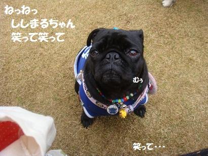 DSC06448_20121029111938.jpg