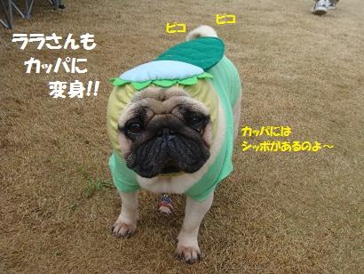 DSC06451_20121101003230.jpg