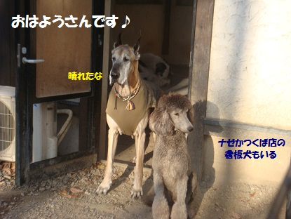 DSC06453_201401261720405fa.jpg