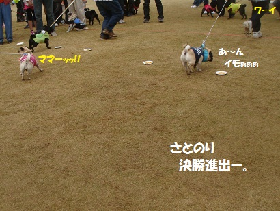 DSC06586_20121030042713.jpg