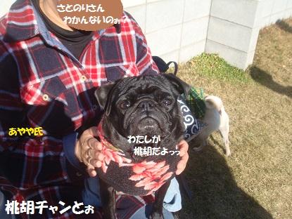 DSC06635_20140131035251a84.jpg