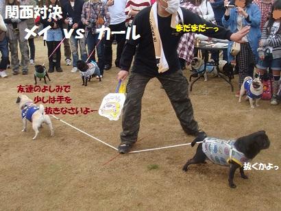 DSC06693_20121101231506.jpg