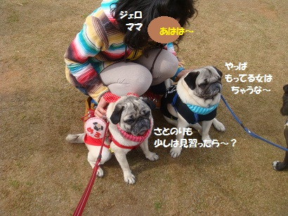 DSC06801_20121103140402.jpg