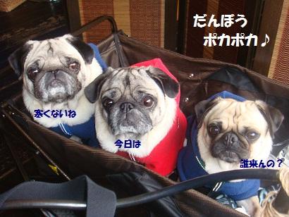 DSC06923_20121230032936.jpg