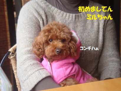 DSC06931_20121230130701.jpg