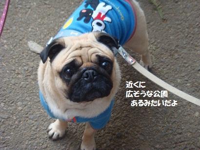 DSC06962_20121230133342.jpg