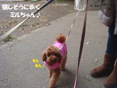 DSC06964_20121230133341.jpg