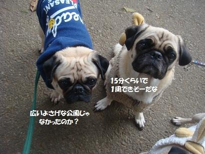 DSC06973_20121230133342.jpg