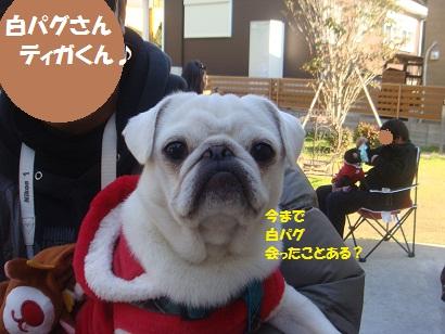 DSC07034_20130114151213.jpg