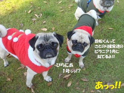 DSC07107_20130114151336.jpg