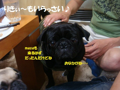 DSC07179_20121105201533.jpg