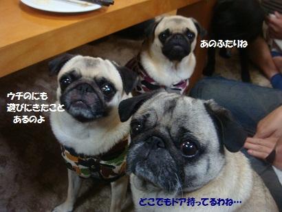 DSC07181_20121106034456.jpg
