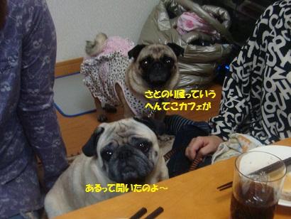 DSC07188_20121106033625.jpg