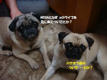 DSC07225_20121105203407.jpg