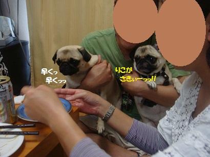 DSC07274_20121106041438.jpg