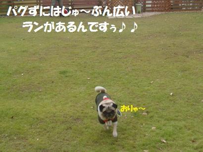 DSC07291_20121230230610.jpg