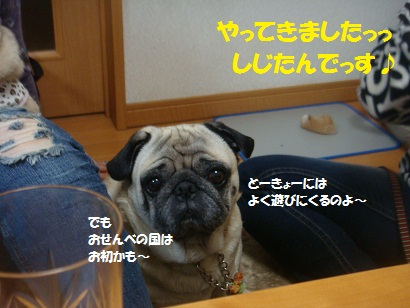 DSC07353_20121105201534.jpg