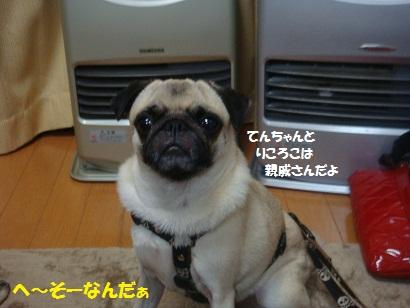 DSC07357_20121106044119.jpg
