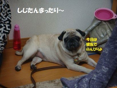 DSC07410_20121106044119.jpg