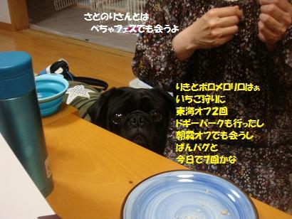 DSC07433_20121106051154.jpg