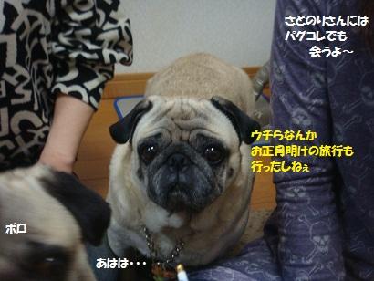 DSC07438_20121106051154.jpg