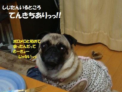 DSC07442_20121105201534.jpg