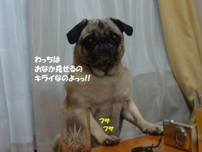 DSC07577.jpg
