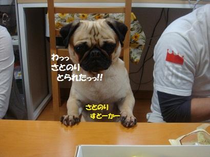 DSC07637_20121108040457.jpg