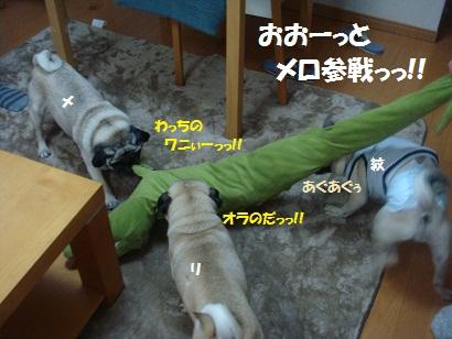 DSC07677_20121109200324.jpg