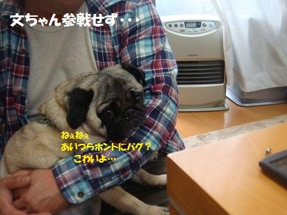 DSC07708_20121109203504.jpg