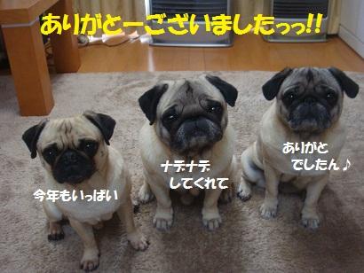 DSC07975_20121231150625.jpg