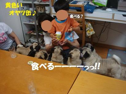 DSC08407_20121116031338.jpg