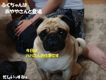 DSC08420_20121115093724.jpg