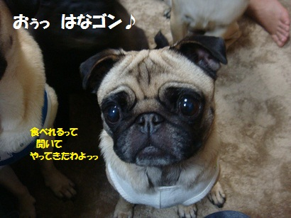 DSC08423_20121115093724.jpg