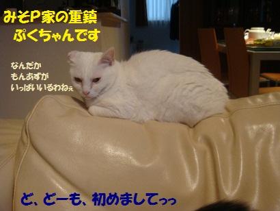 DSC08619_20120912190652.jpg