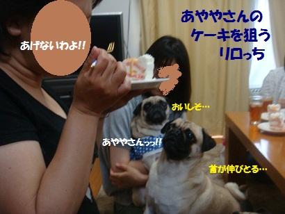 DSC09151_20121122212057.jpg