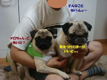 DSC09163_20121122210014.jpg