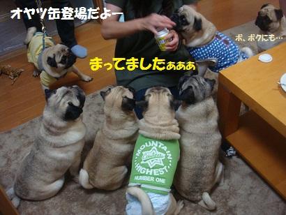 DSC09170_20121123032114.jpg