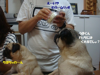 DSC09220_20121123034418.jpg
