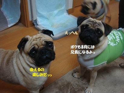 DSC09291_20121122124236.jpg